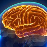 脳科学 ファントムペイン